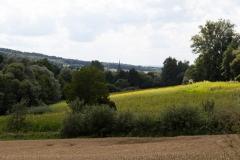 Sonnenblumenfeld bei Litzendorf