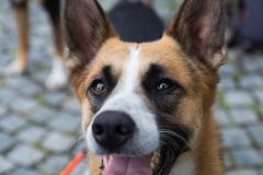 Hunde auf der Bierwanderung in Franken