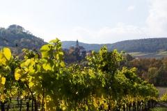 Weinort Castell St Johannes Kirche