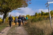 Castell Weinberge Aussicht Weinwanderung