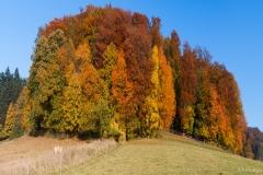 panorama-herbstlicher-odenwald