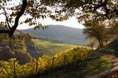 Herbst im Weinberg Castell Unterfranken