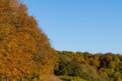 Herbst in Unterfranken Castell